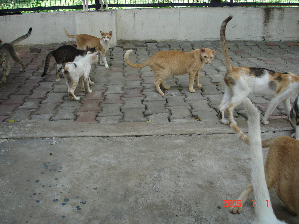 Spay and Neuter 2000 Cats and Dogs in Chennai