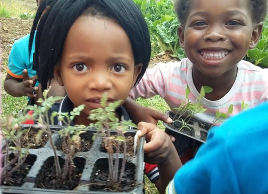Little seedlings waiting to go