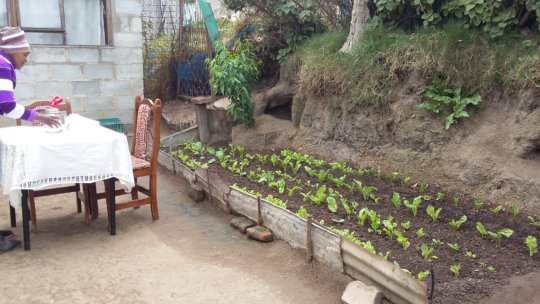 Growing food in every nook and cranny!