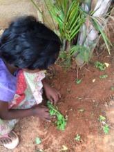 Lavanya sows a sapling during her U&I class