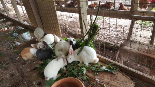 Bunnies at the training center!
