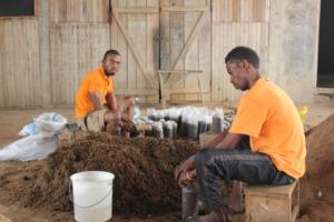 Osei employs two men to help produce mushrooms