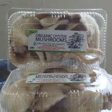 NASEY Organic Oyster Mushrooms