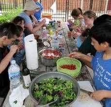 Preparing a garden salad in the garden