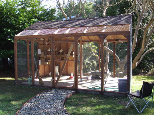 Aviary built for adopted & foster MickaCoo pigeons