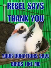 Thank You So Much for Helping Palomacy Help Birds