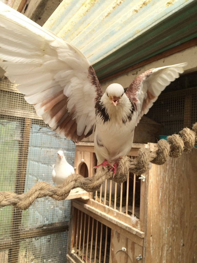 Thrilled to be spending time in the aviary 4/13