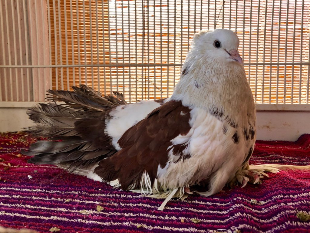 Sizzle thanks you for helping Palomacy help him