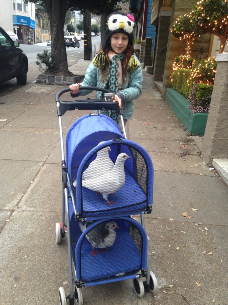 The Palomacy-recommended pigeon stroller is here!