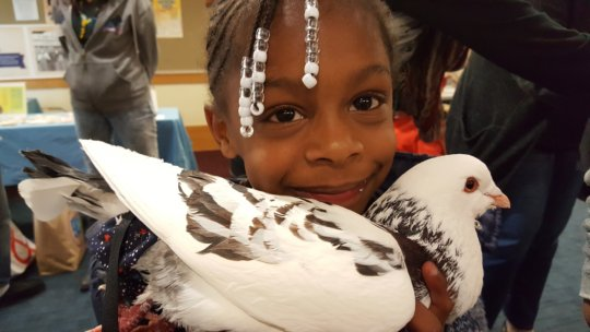 Palomacy Pigeon & Dove Adoptions