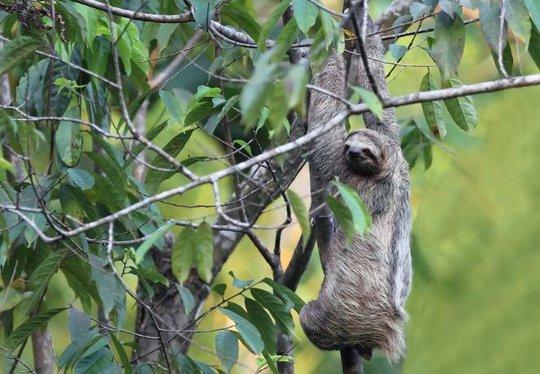 Sloth - Dana Holm