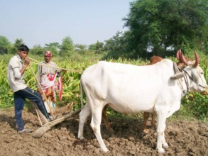 Ranjana's son now helps her in tending the field