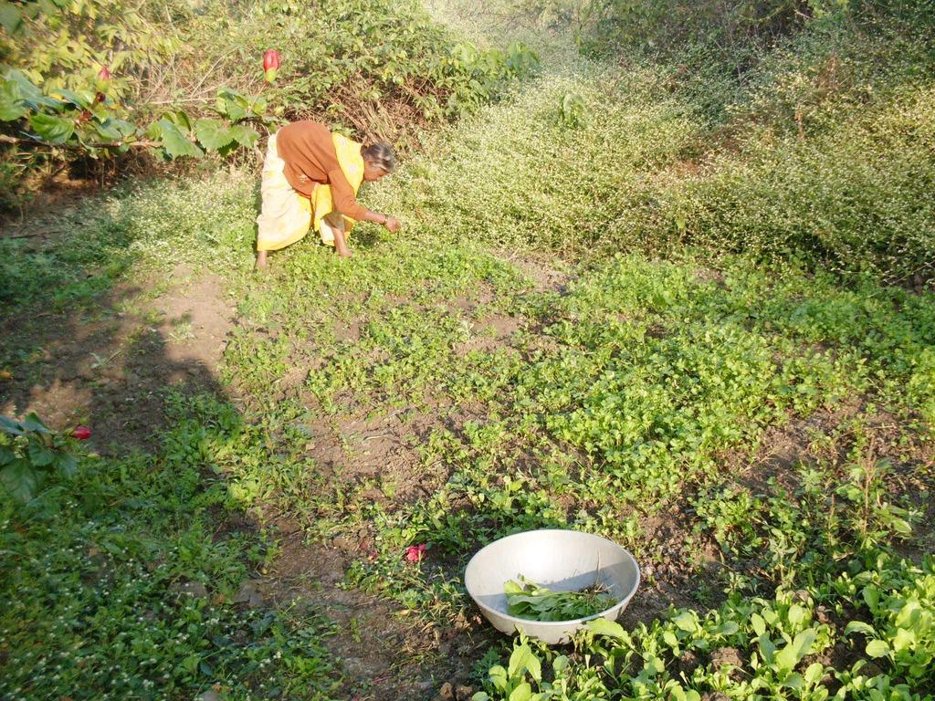 Babytai plucking vegetable from her kitchen garden