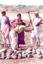 Widow as a skilled farming person