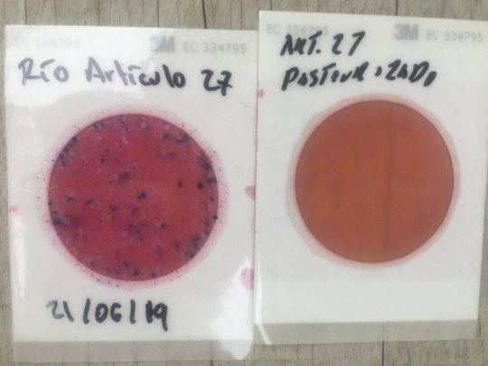 Bacteria growing on plates