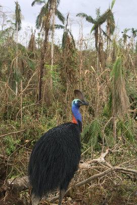 Fragmentation exposes habitat to cyclonic events