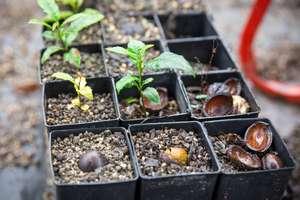 Seedlings in the nursery (c) Martin Stringer