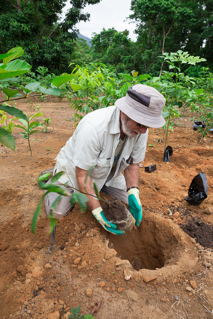 Planting a cassowary food tree