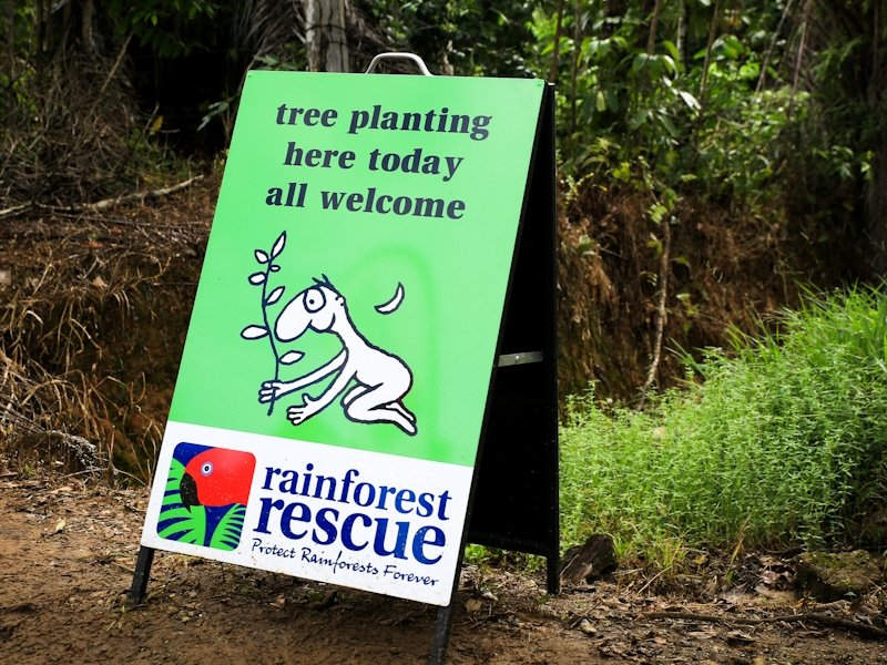Daintree Tree Planting 2014 (c) Martin Stringer