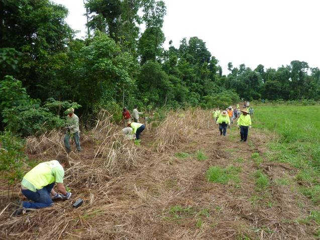 Planting at a Mission Beach Cassowary Corridor