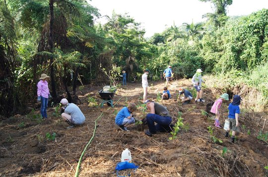 Planting Trees in the Cassowary Corridor