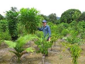 New Cassowary Habitat Growing