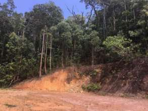 Lot 32, Cape Tribulation Rd