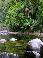 Mossman Creek, Cassowary Conservation Reserve