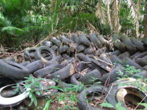 Tyres dumped in the lowland Daintree rainforest