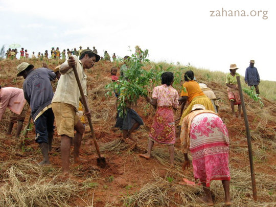 Community reforestation celebration