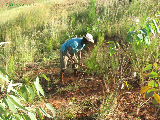 Tending trees planted during Int. Women's Day