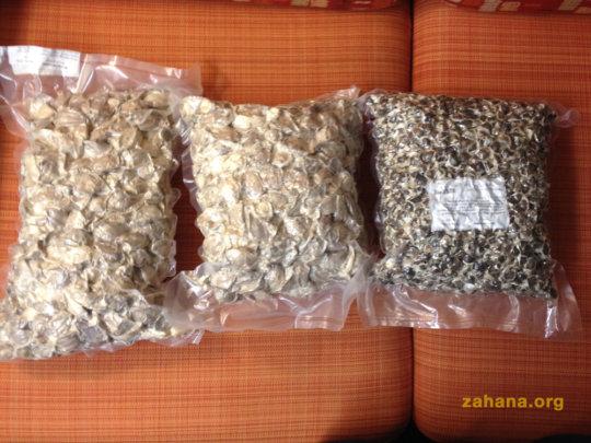 Moringa Oleifera and Moringa Stenopetala -Zahana