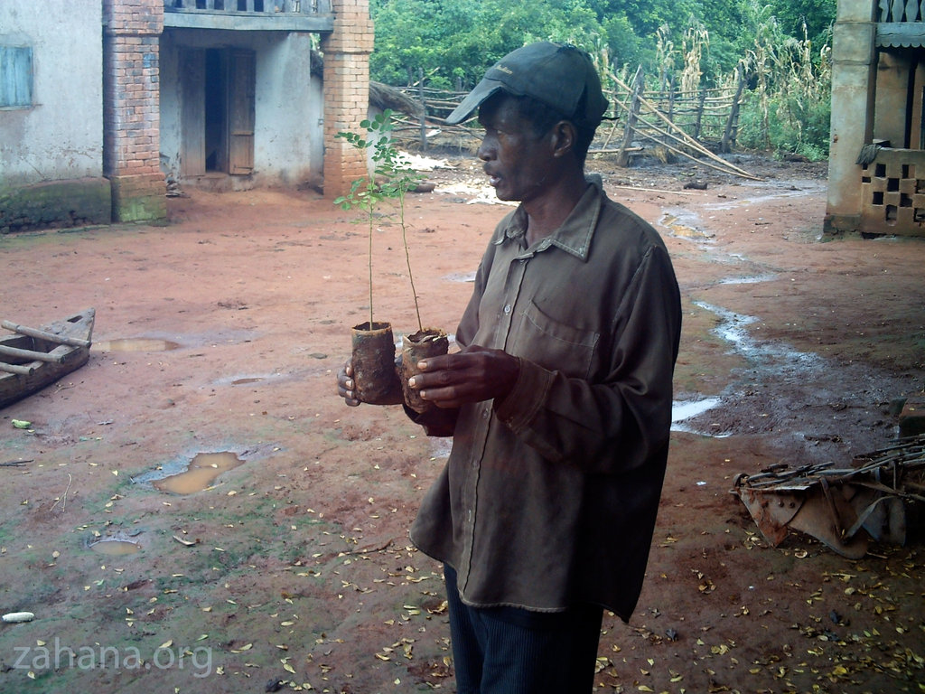 Master gardener with 2 Moringa oleifera seedlings