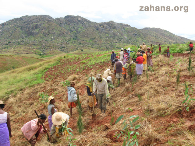 Planting the new forest in Fiadanana