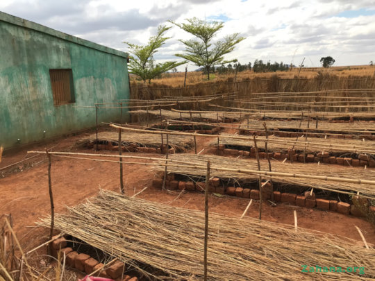 New tree nursery Fiarenana