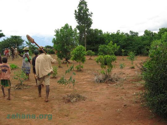 Reforestation near the school
