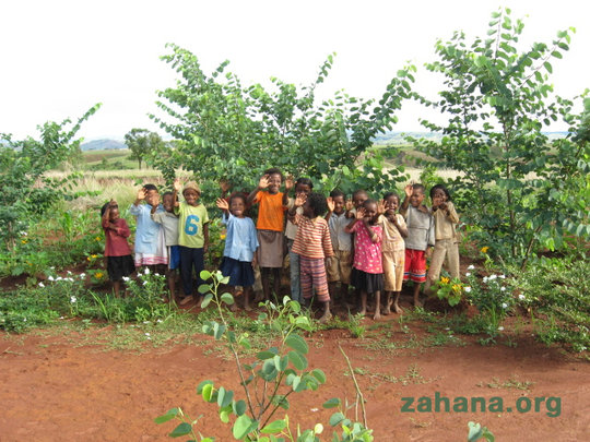 Planting trees in the schoolyard offers shade