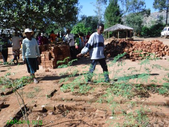 Zahana's teacher showing the new moringa trees