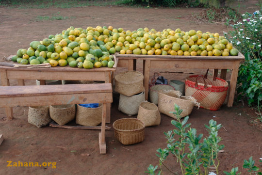 Mango bounty and home harvest made baskets