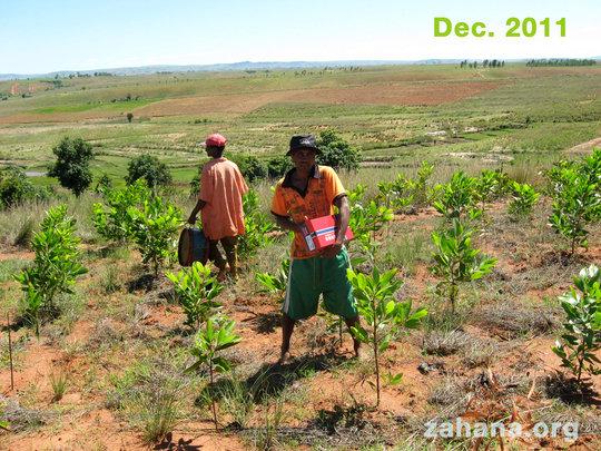 Our master gardener Bary in Dec 2011