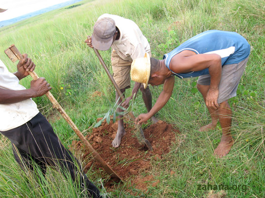 Villagers planting a tree