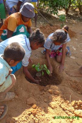 Planting the citrus tree seedling