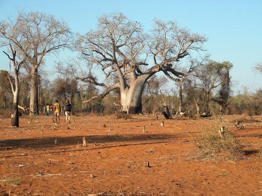 Deforestation in Action