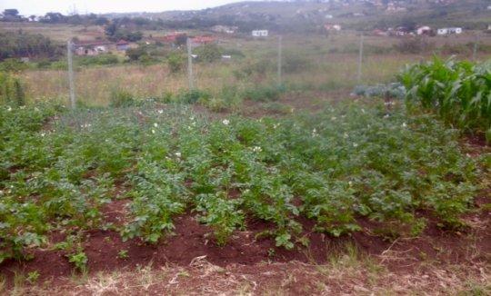 Vegetables for Siyabonga