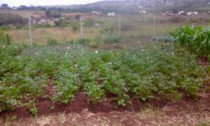 Vegetables for Siyabonga