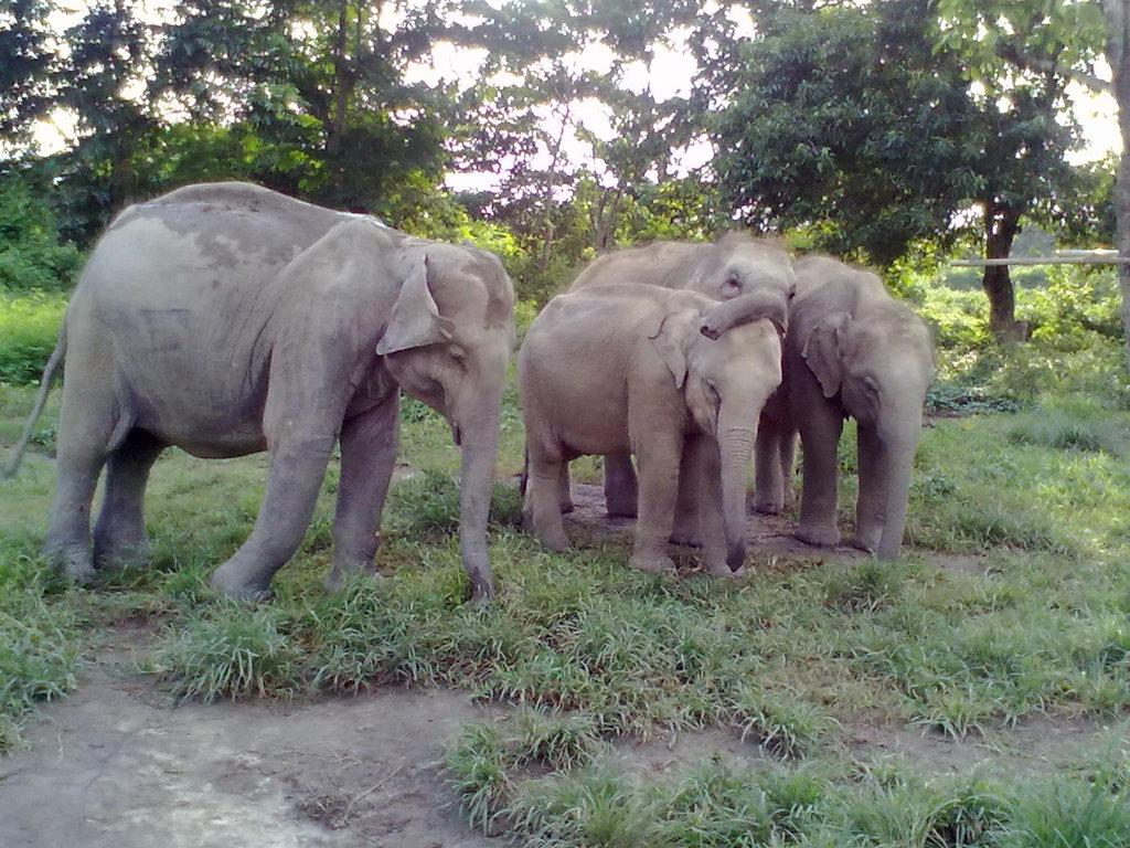 (L-R) Jaklabanda, Nunai, Rani  and Philip at CWRC.