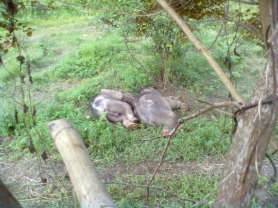 (L-R) NunaI and Philip taking an afternoon nap.