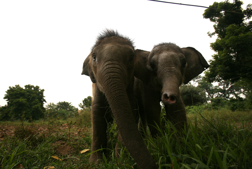 Philip (left) with his new playmate Rani, Nov 2011