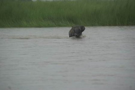 Philip Dev swimming to safety Pic_IFAW-WTI
