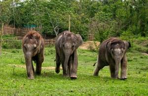 Philip(L), Rani & Nunai on way to the evening feed